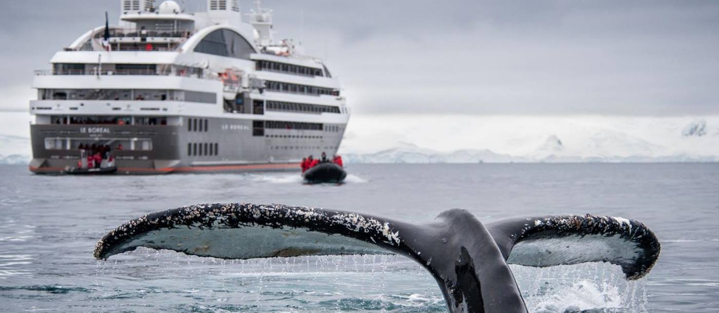 Whale alongside Le Boreal in Antarctic