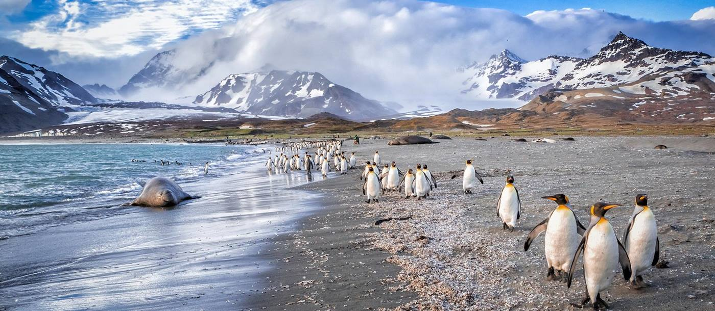 Penguins and walrus on beach in the Antarctic