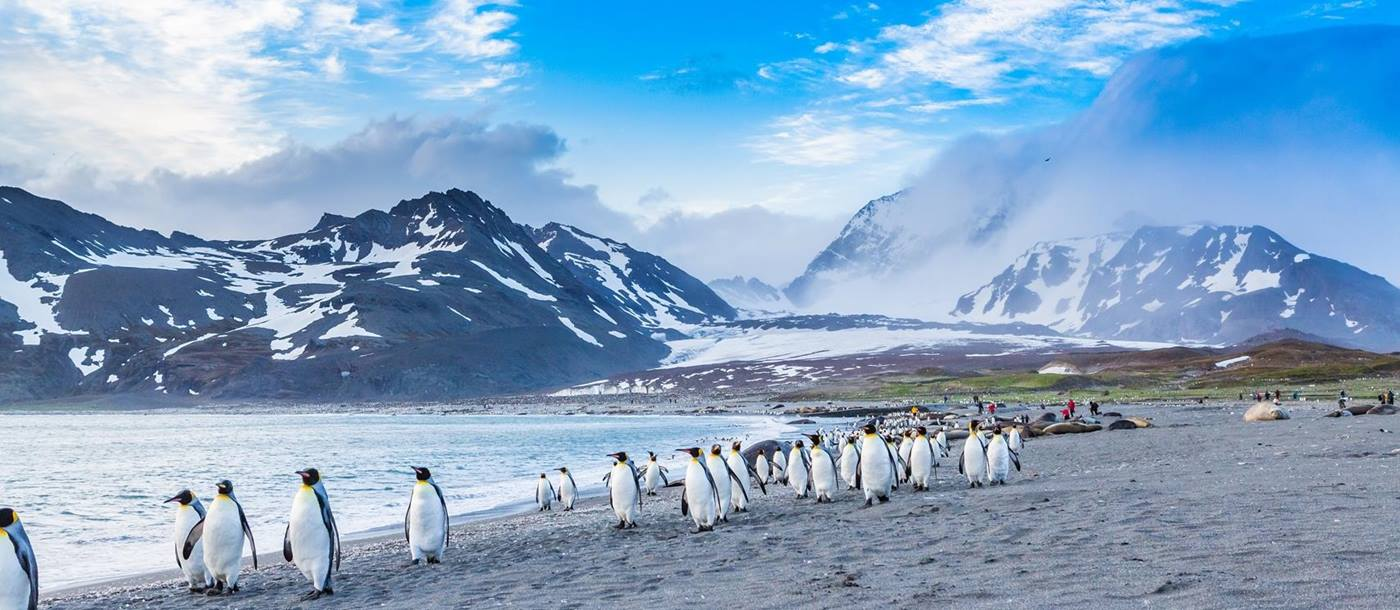 Penguins on beach in Antarctic