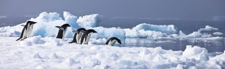 Penguins jumping into sea-Antarctica