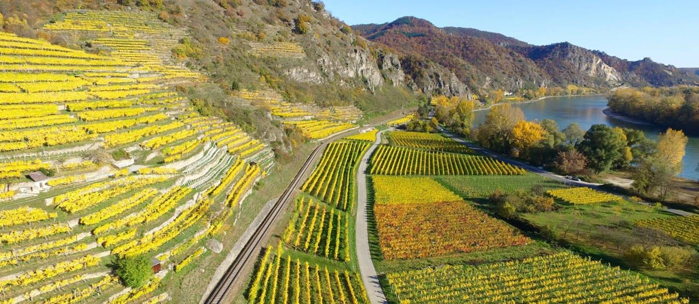 Landscape of Wachau Valley vineyards in Austria