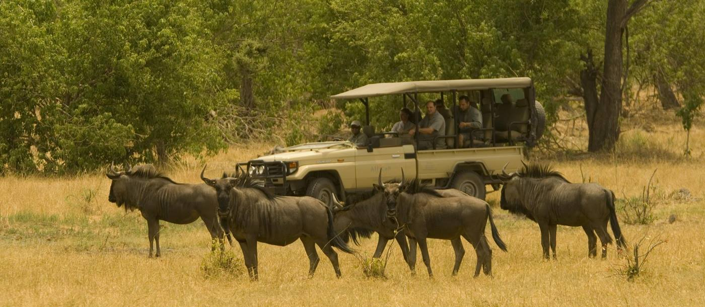 A game drive from Linyanti Bush Camp