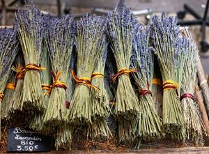 Lavender harvested in France