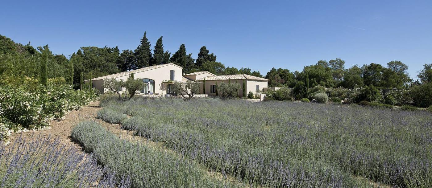 Lavender and exteriors of Villa Adelaine, Provence