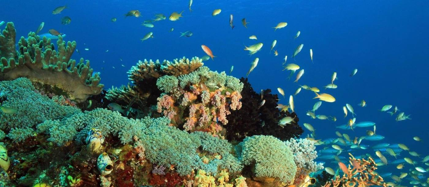 coral reefs at Raja Ampat