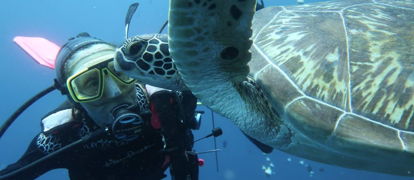 Diver underwater up close to a turtle