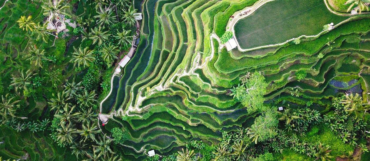 Aerial view of lush green rice terraces in Bali Indonesia