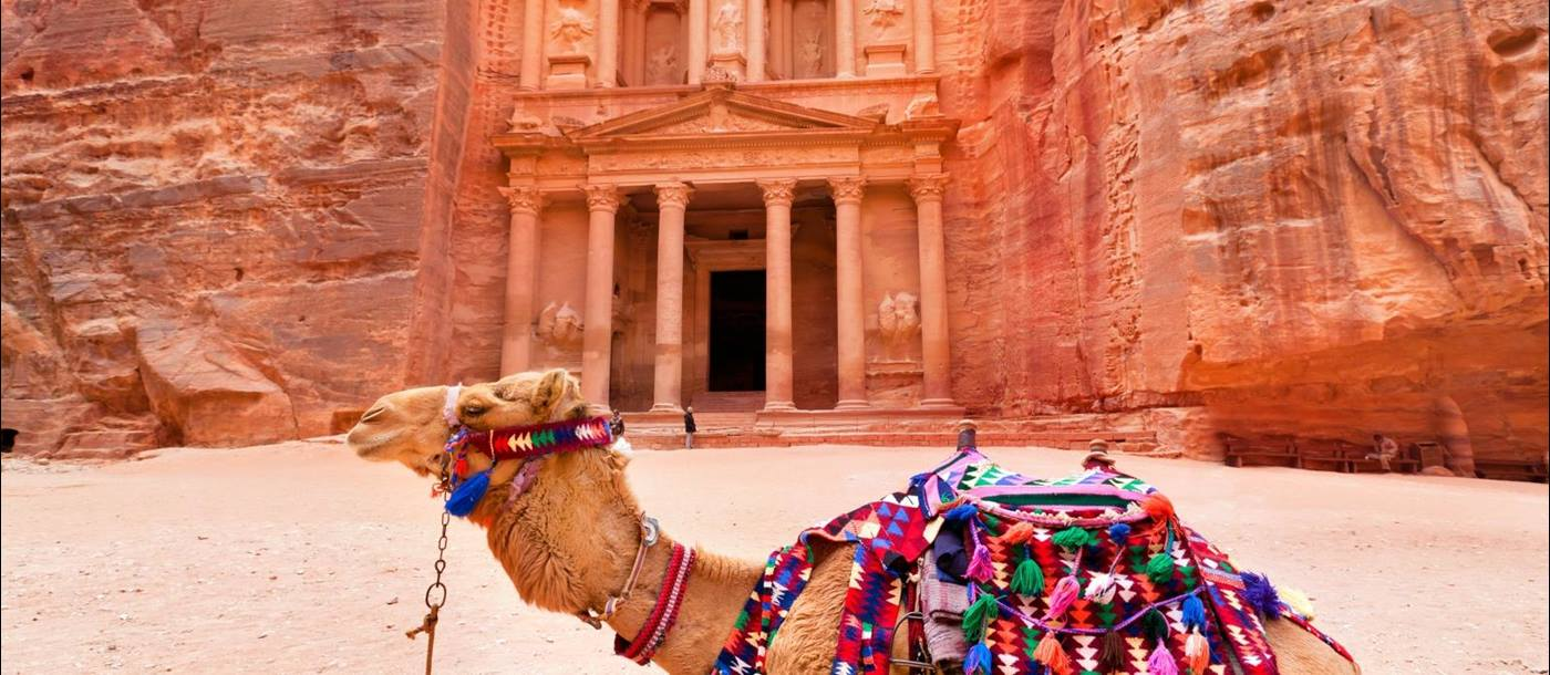 Petra Ancient City in Jordan with a camel with a colourful saddle