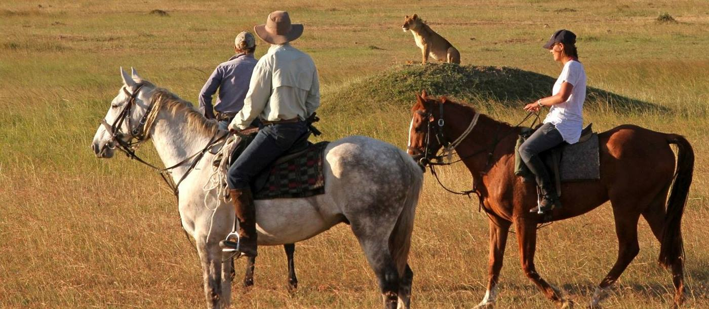 Horse riders with lion in Masai Mara in Kenya