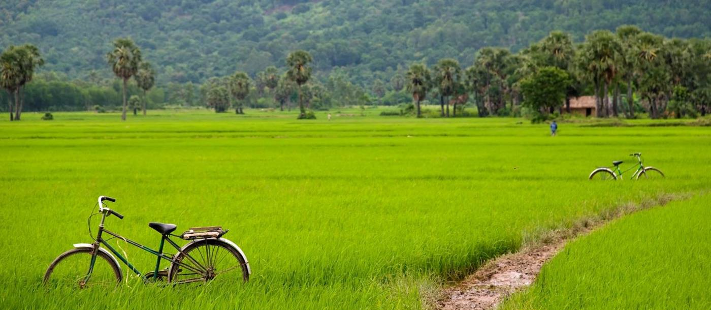 Bicycle in a paddyfield, Laos