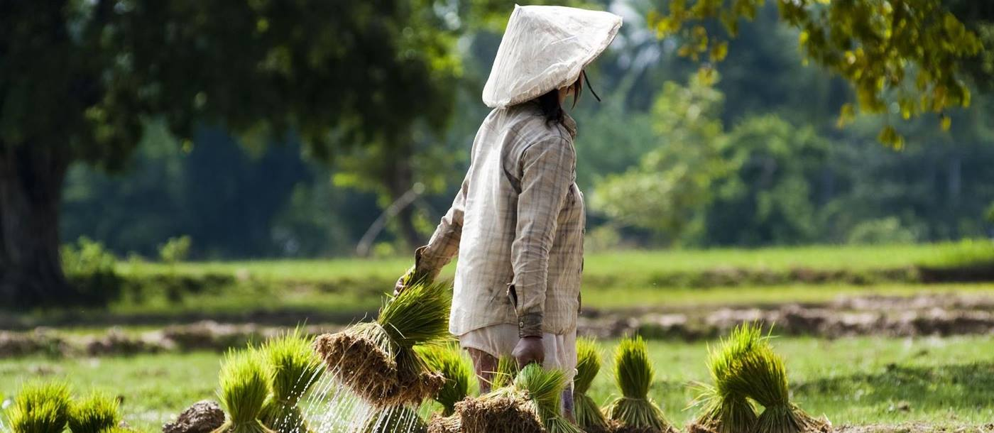 rice farmer in laos