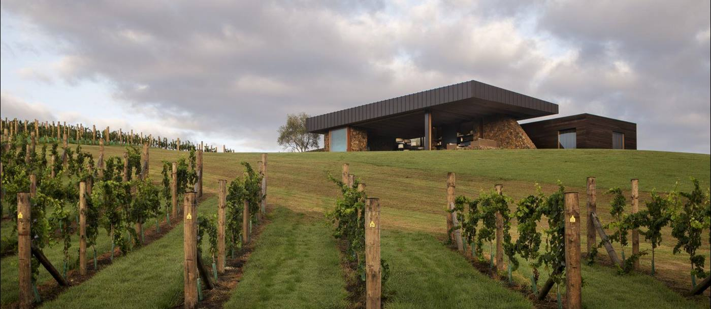 The Landing New Zealand The Vineyard exterior with grapevines in front