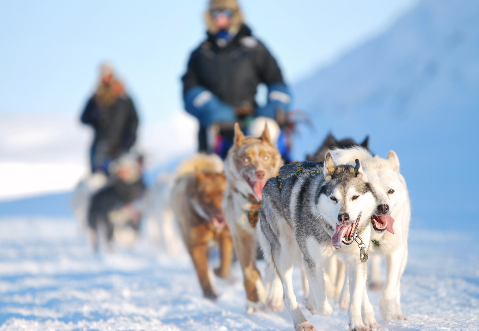 Svalbard dogs in Norway