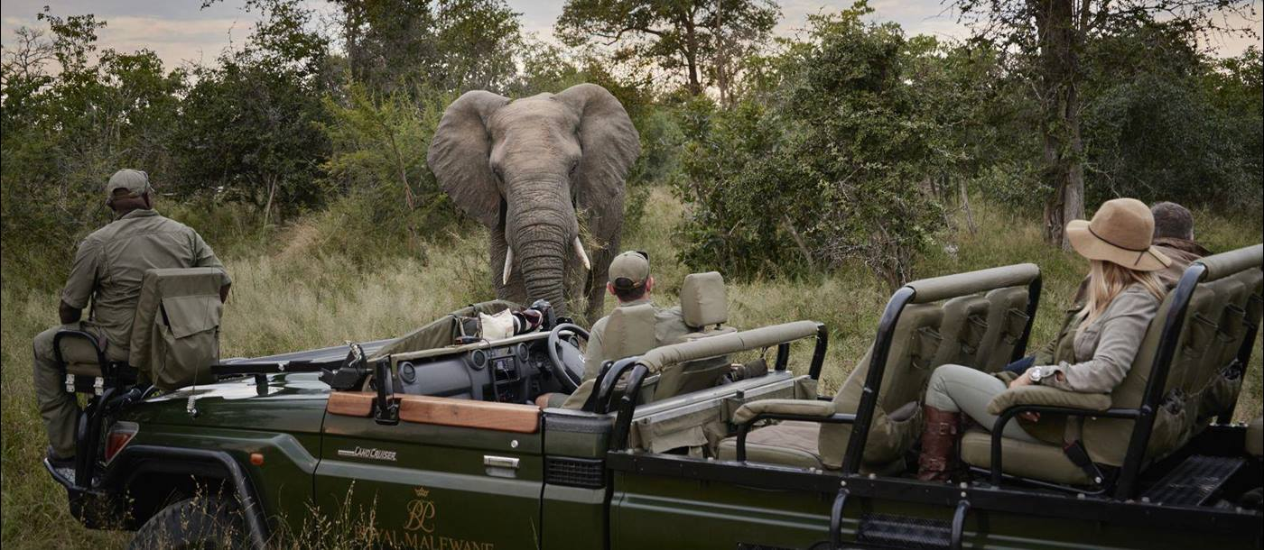 Elephant on game drive - Royal Malewane, Greater Kruger - South Africa