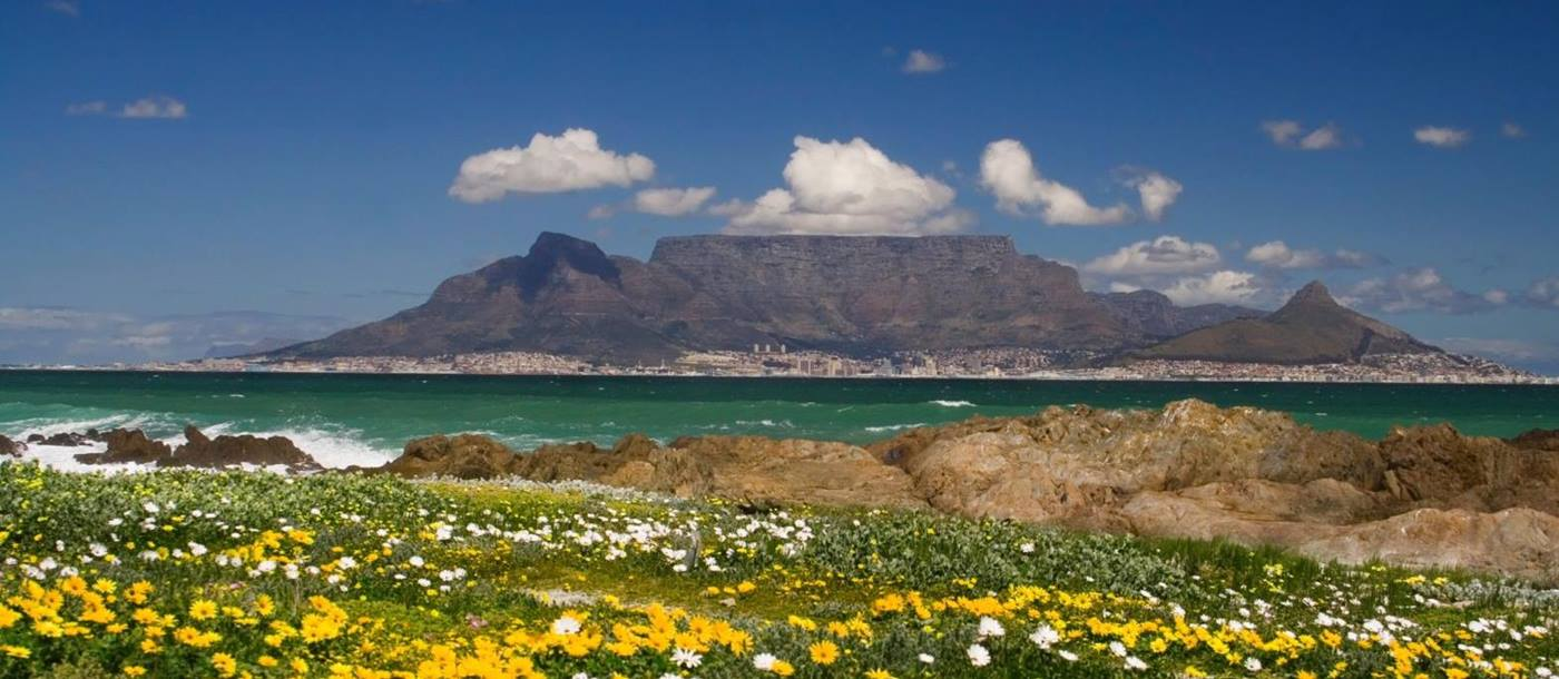 Wildflowers and distant view of Table Mountain in South Africa