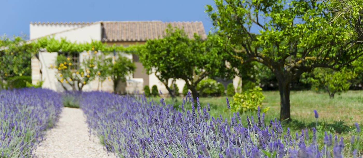 Lavender, citrus trees, pathway and guesthouse in garden at Villa Victoria on Mallorca, Spain