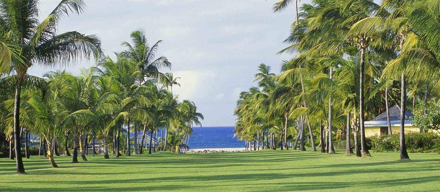 The Avenue of Palms at the Nisbet Plantation, Nevis
