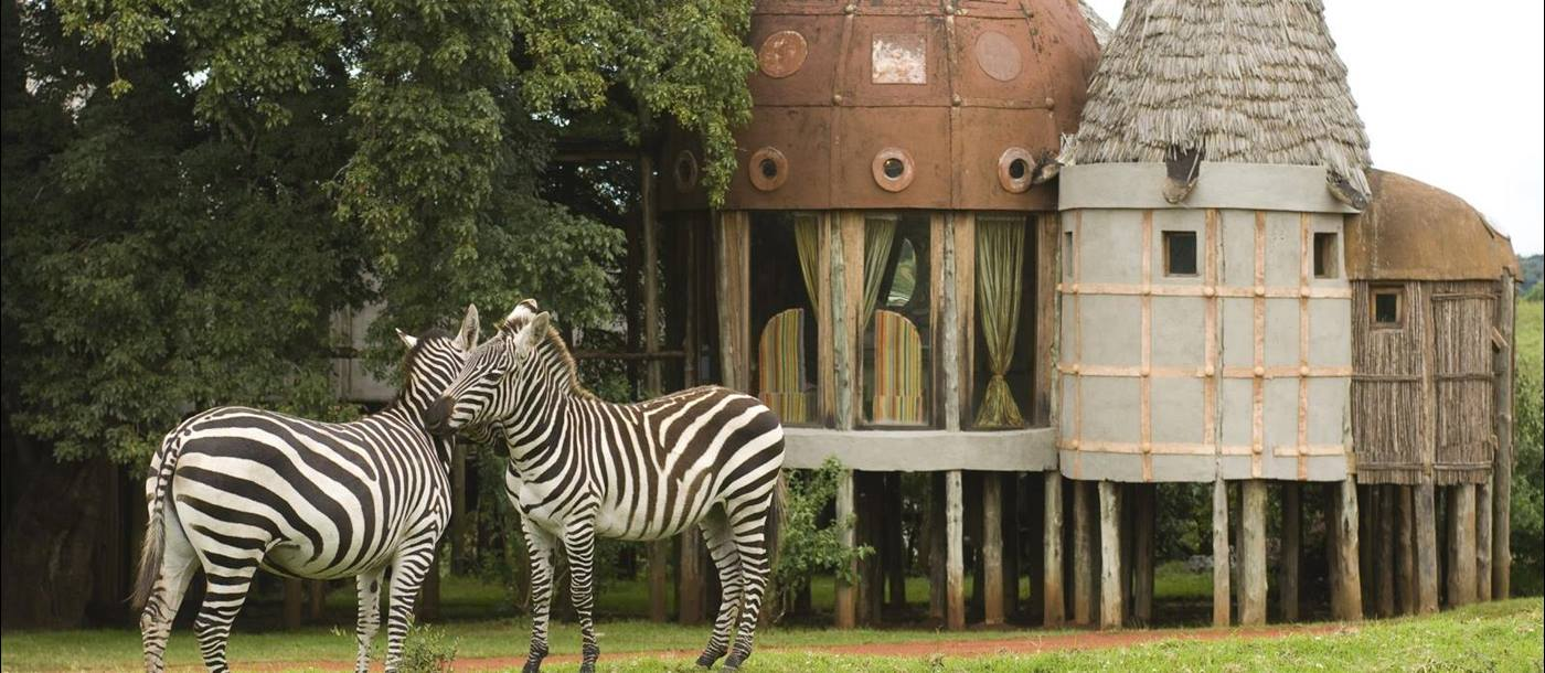 Zebras outside lodge at &beyond Ngorongoro Crater Lodge in Tanzania