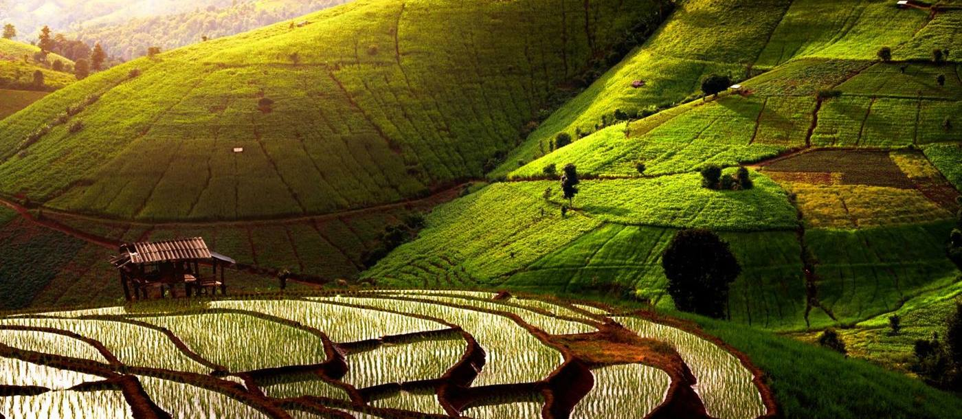Rolling green rice plantations close to Chiang Mai in Thailand