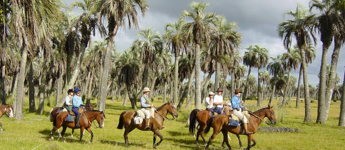 Four horseriders with palmtrees near Estancia, Uruguay