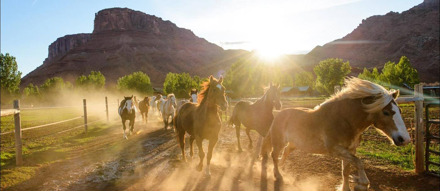 Horses  of Sorrel River Ranch, USA