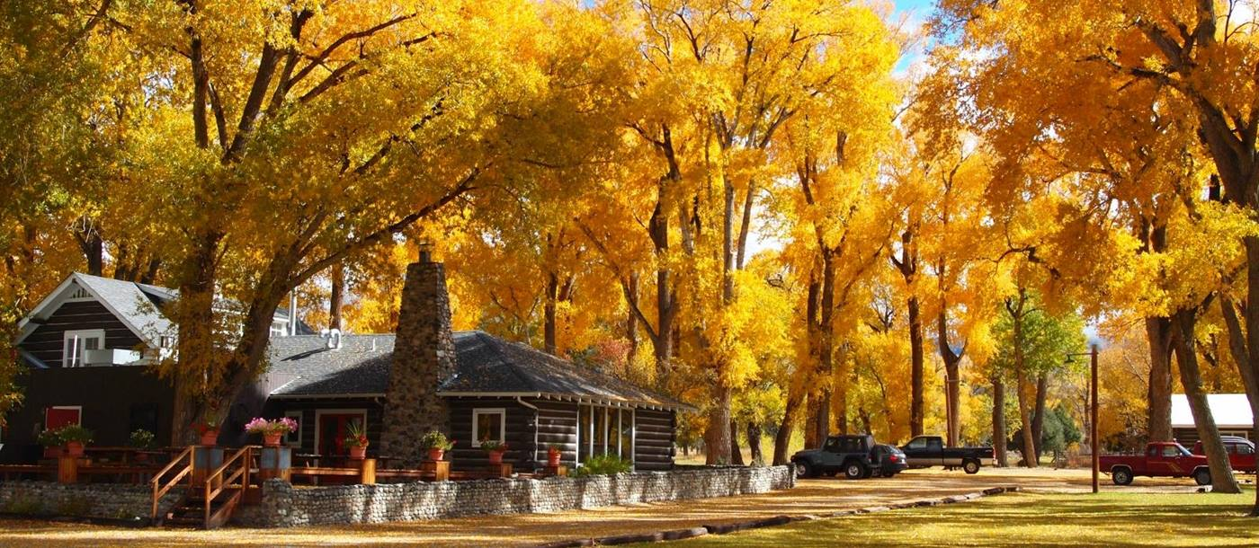 Fall leaves of bright yellow with ranch lodge, at Zapata ranch colorado